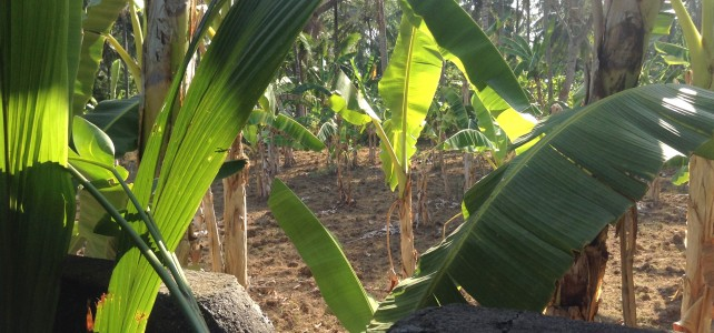 Bali, 2014:  Chapter 2, 9 Lives and Letting Go in My Banana Field