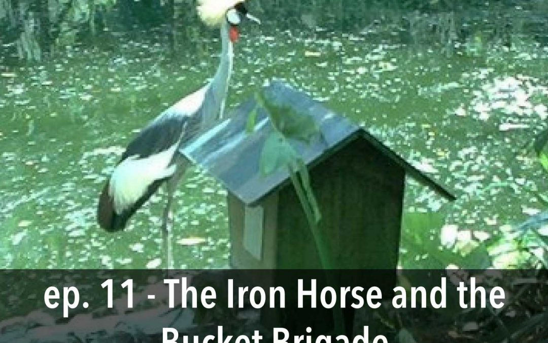 """The Iron Horse and the Bucket Brigade"", Episode 11"
